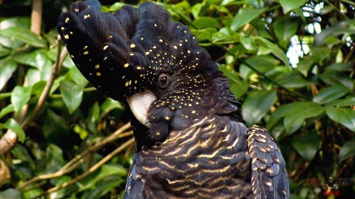 Black parrot bird