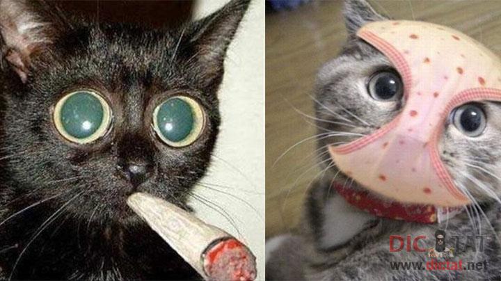 картинки котов крутых