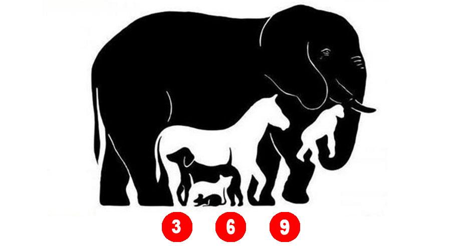 сколько животных видишь на картинке ответ пост