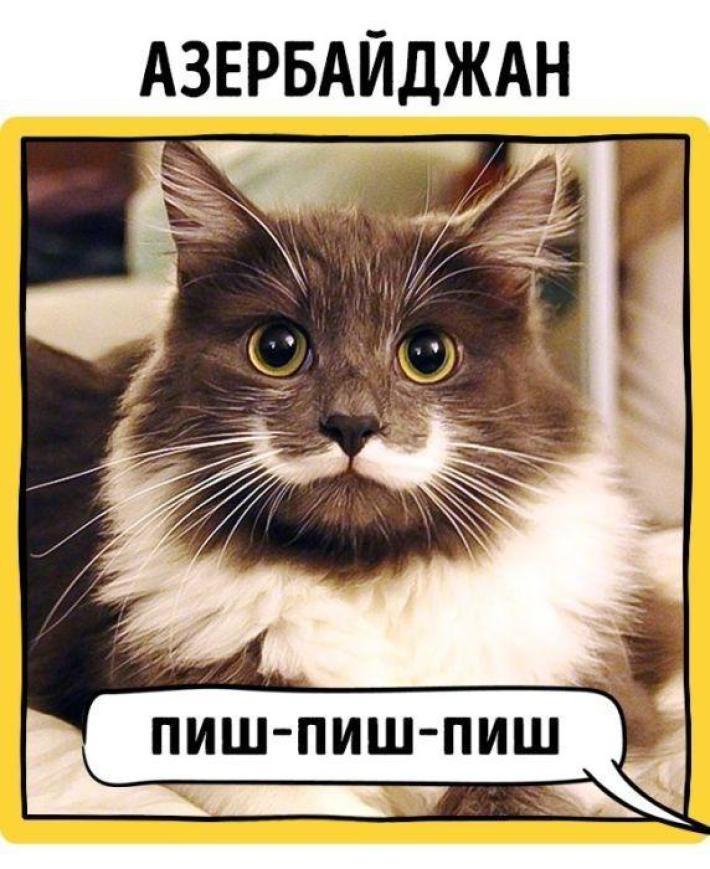 у кого как зовут кота