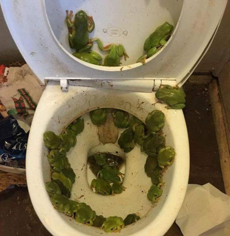 podliz-posle-tualeta