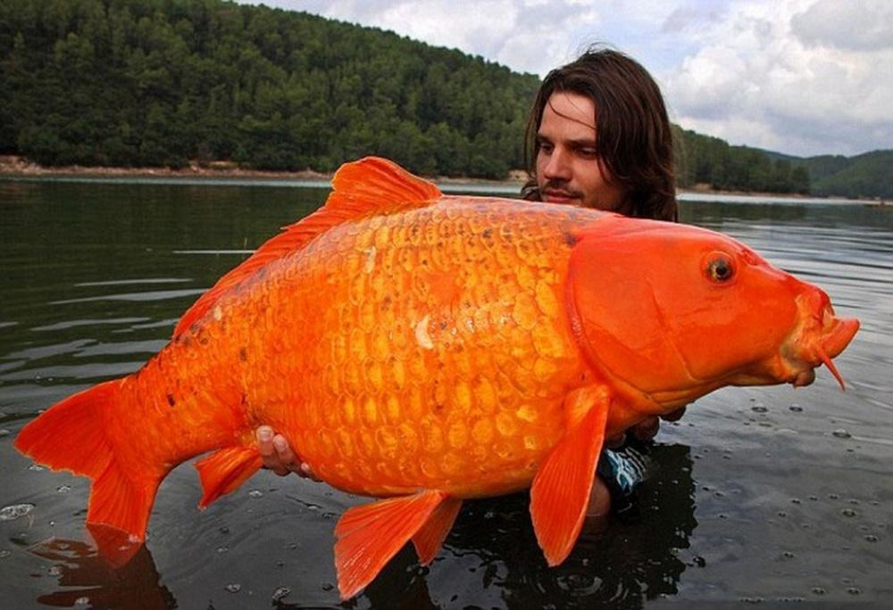 рыбак поймал 35 рыб из седьмой части рыб он сварил уху
